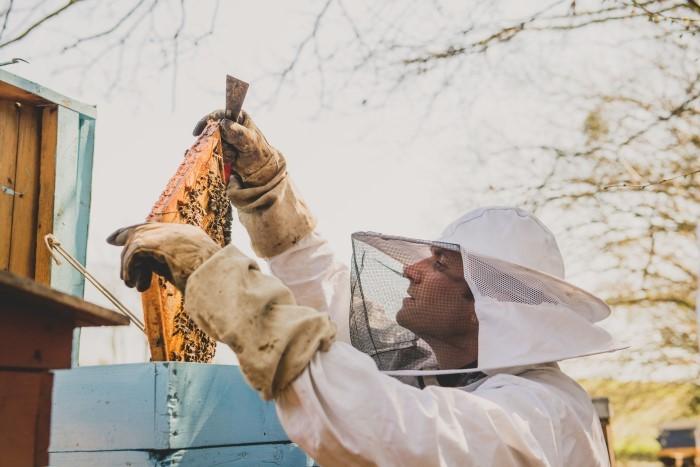 Photographe professionnelle en agriculture - apiculture