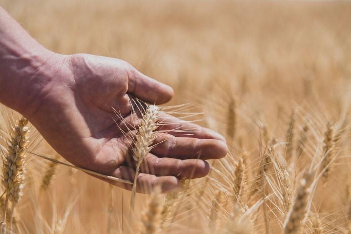 Photographes spécialisés en agriculture - grandes cultures, cereales