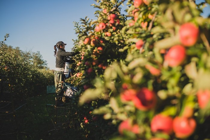 Photos de fruits, photographes professionnelles en agriculture