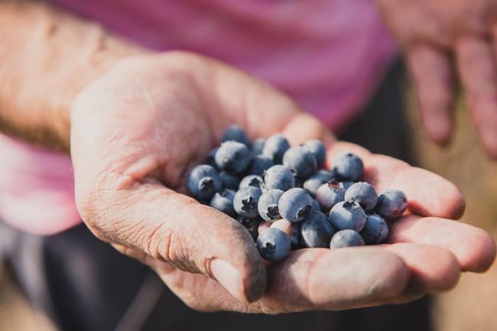 Photos fruits, photographes professionnelles en agriculture
