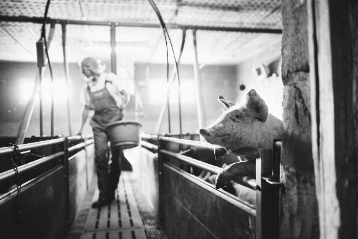 Photos d'élevage, photographes professionnelles en agriculture