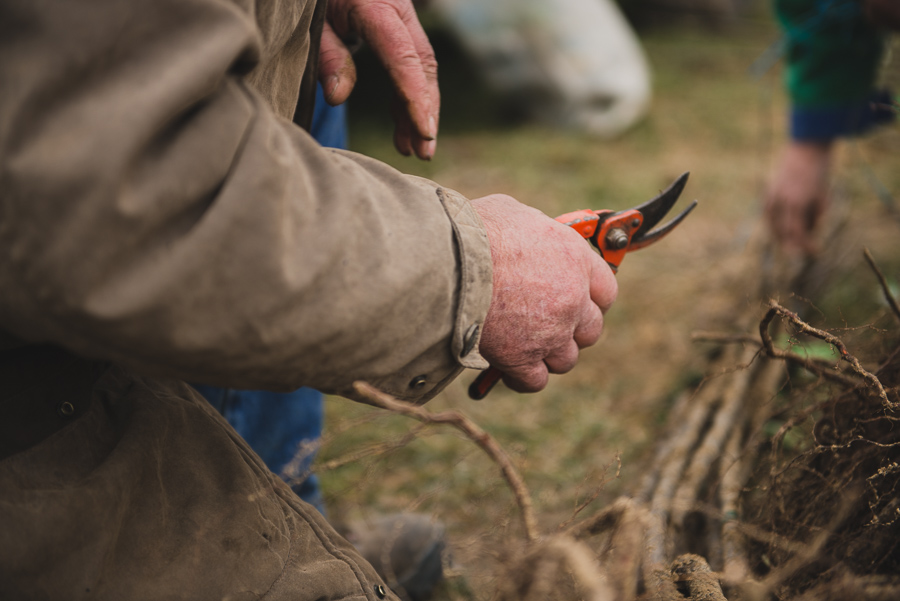 Photographe en agriculture : reportage sur la plantation des poiriers