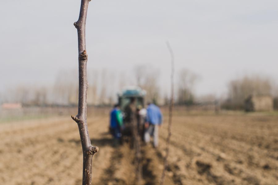 Reportage photo en agriculture : la plantation des poiriers - ©Studio des 2 Prairies, photographes agricoles