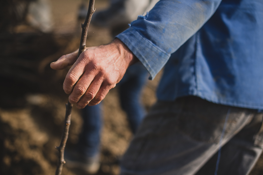 Photos de la plantation des poiriers en Rhône Alpes - ©Studio des 2 Prairies