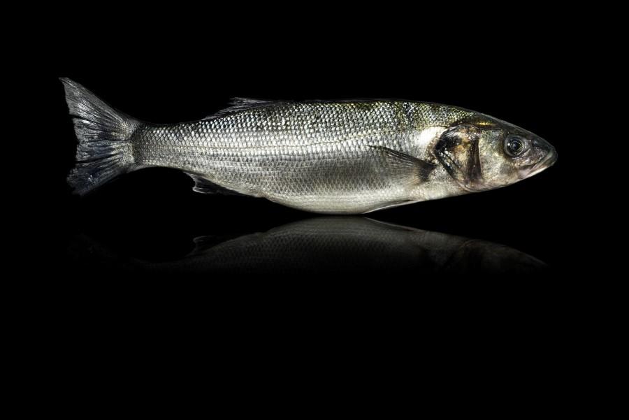 Photos de poissons sur fond noir - ©Studio des 2 Prairies / Rhône Alpes