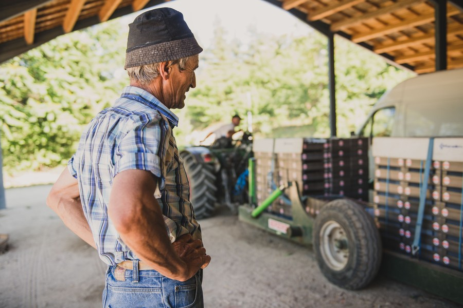 Reportage photo en agriculture : récolte des cerises - Studio des 2 Prairies