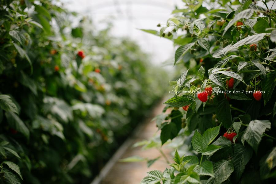 photographie agriculture fruits et legumes