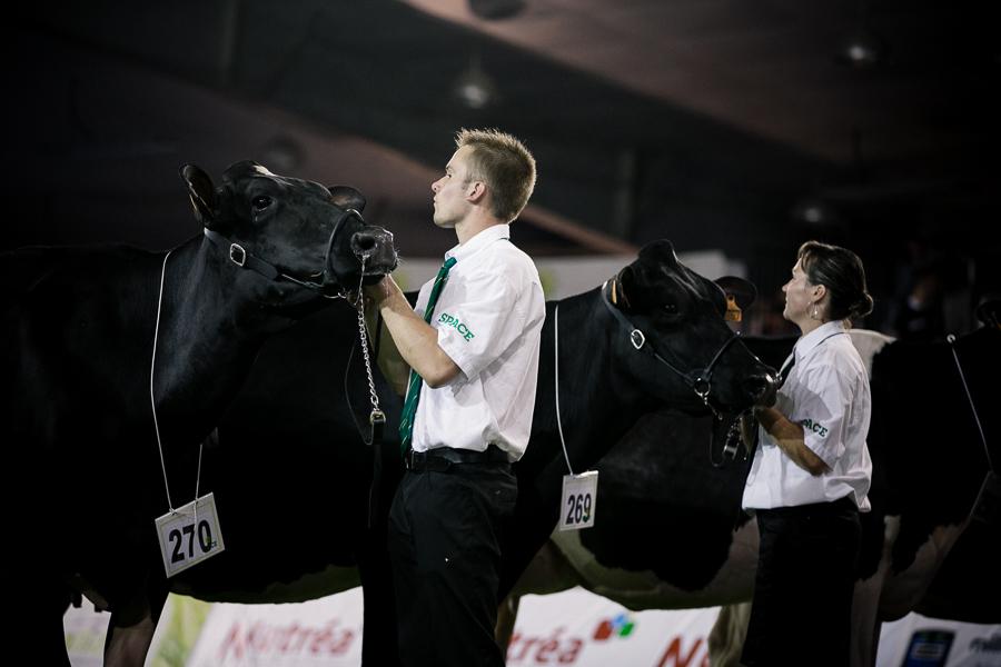 Bovins dans le Ring : Prim'Holstein