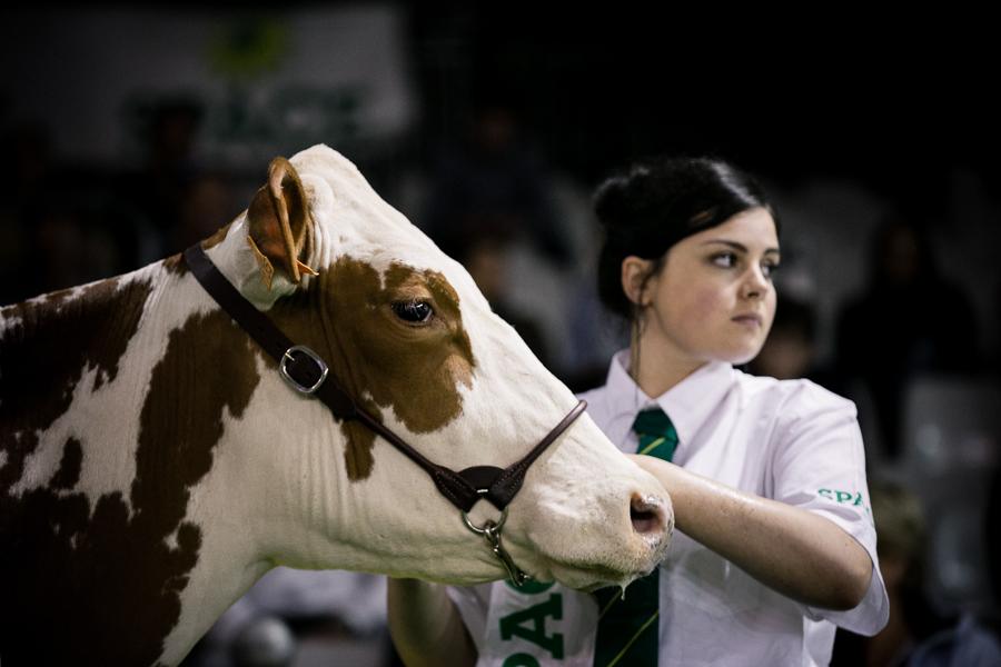 Concours de Vaches Laitières