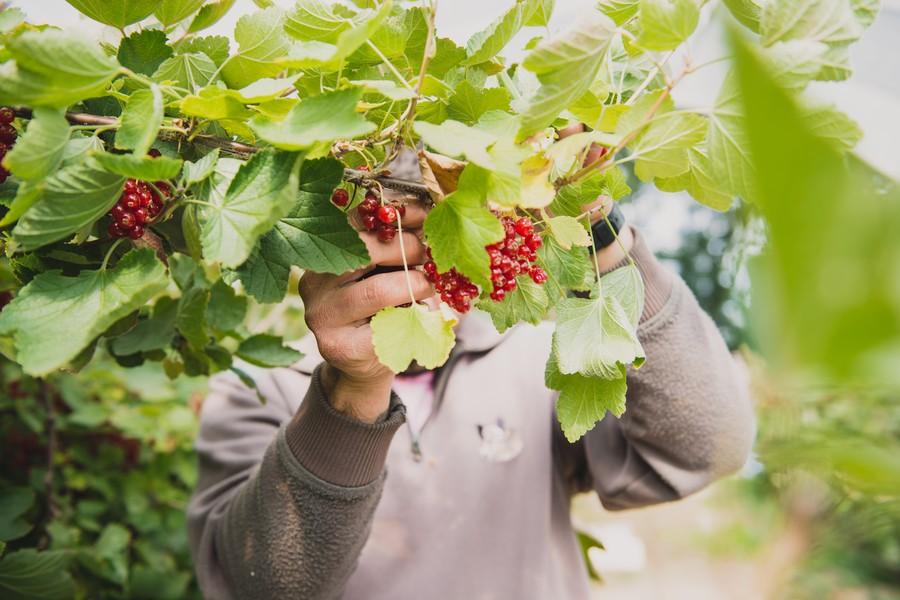 Photographe agriculture ©Eve Hilaire / Studio des 2 Prairies