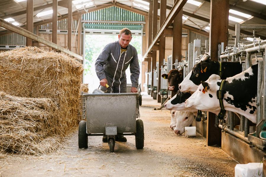 Photographie agriculture : vaches à Epinal