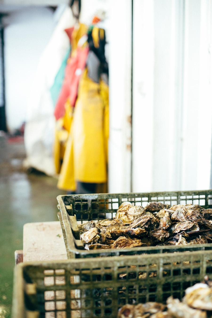 Producteur d'huîtres