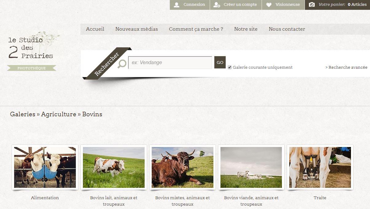 Photos de vachces libres de droit ©Studio des 2 Prairies - photo professionnelle en agriculture