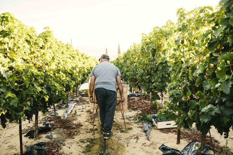 Portrait photo vraie agriculteur - reportage raisin du Ventoux ©Studio des 2 Prairies