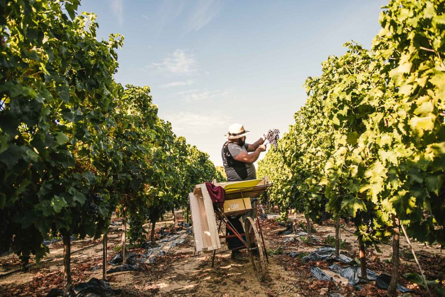 Reportage photographique vrai agriculteur, raisin du Ventoux - ©Studio des 2 Prairies