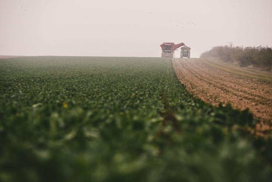 Reportage photo la récolte des betteraves en Champagne Ardennes ©Studio des 2 Prairies