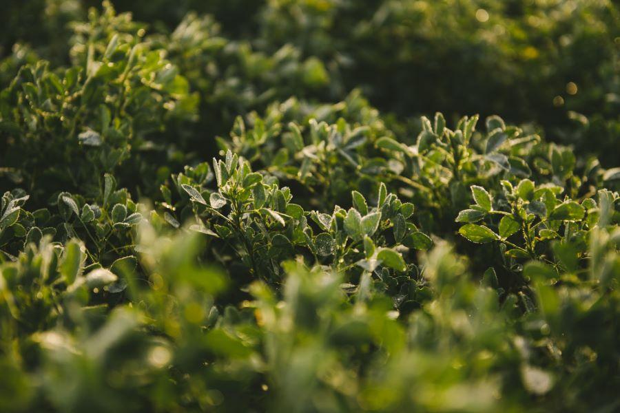 Paysage brumeux de la Marne au petit matin - photographie agricole ©Studio des 2 prairies