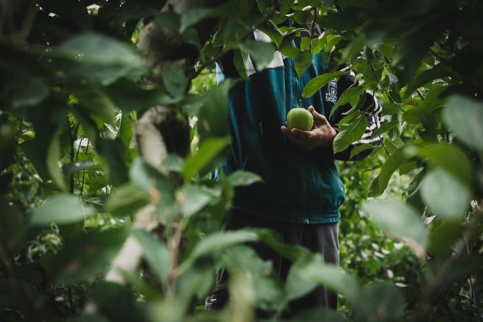 Photographe professionnelle en agriculture