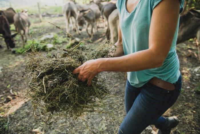 Photos agricoles : photographes spécialisées en agricutlure