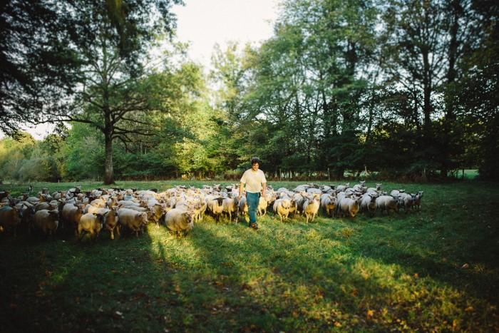 Photo entreprise d'élevage, photographes professionnelles en agriculture