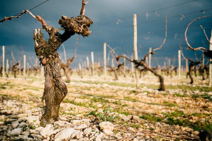 Photos de viticulture et vins, photographes pro en agriculture
