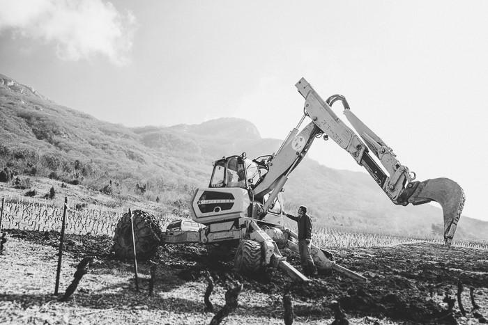 Viticulture : reportage photographique en agriculture