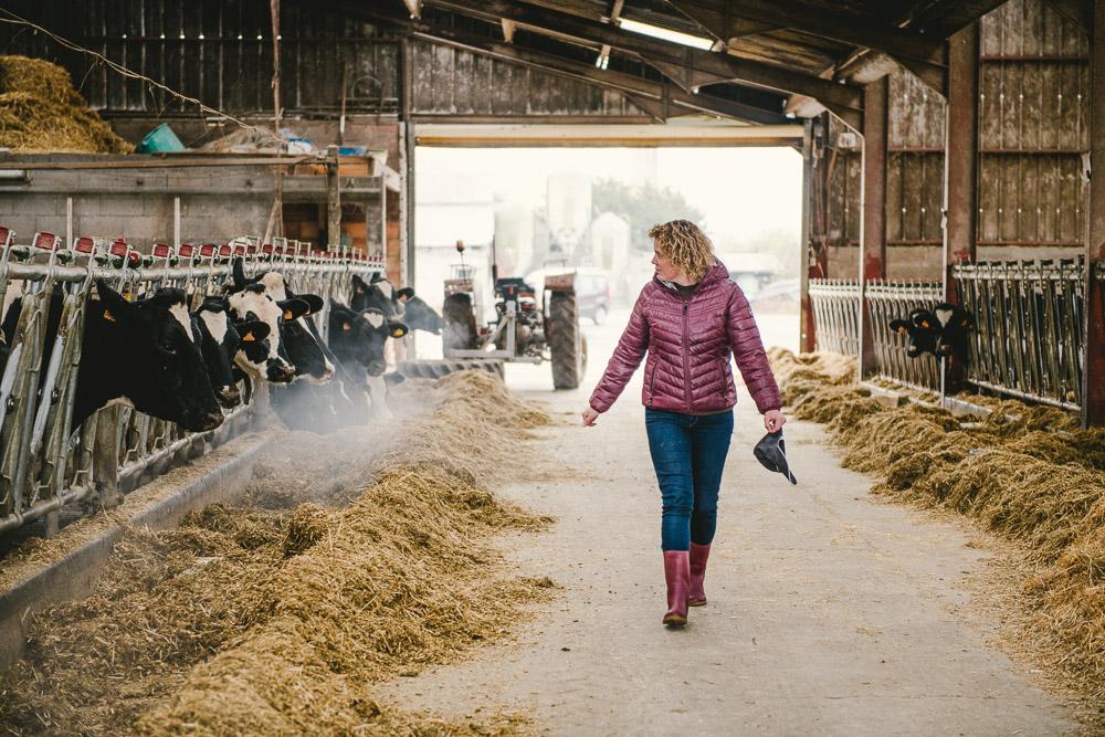 Reportage photo en élevage bovin pour Bresse Bleu
