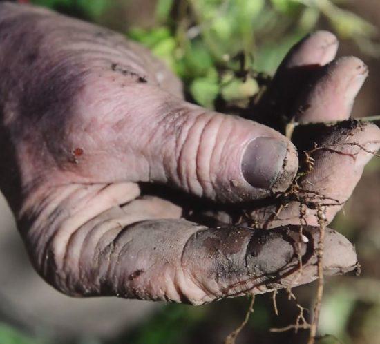 Réalisation vidéo agricole pédagogique : innov'action, les couverts végétaux