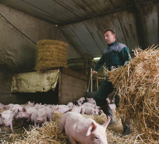 Portrait vidéo éleveurs : porcs sur paille - Agriculture, Le Studio des 2 Prairies
