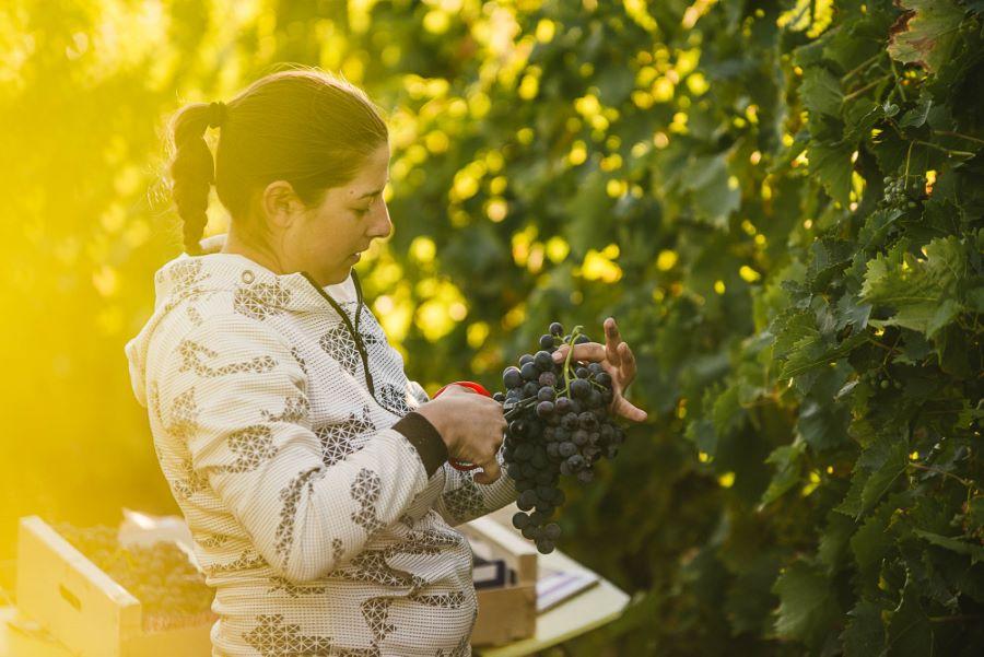 Portrait photo vraie agricultrice viticulture ©Studio des 2 Prairies